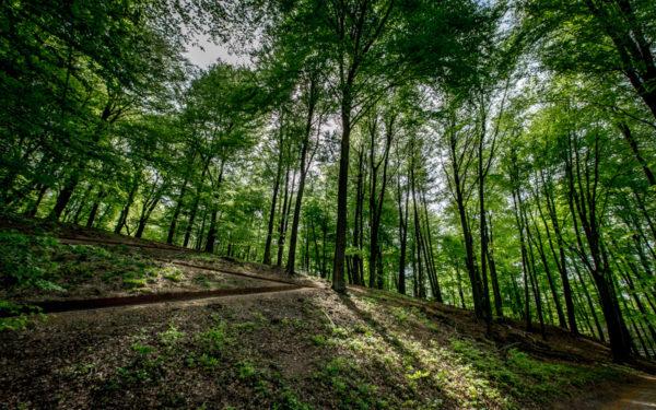 Erosiebestrijding landgoed Mariëndaal